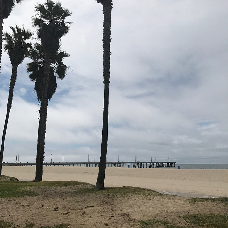 palmtree-californie