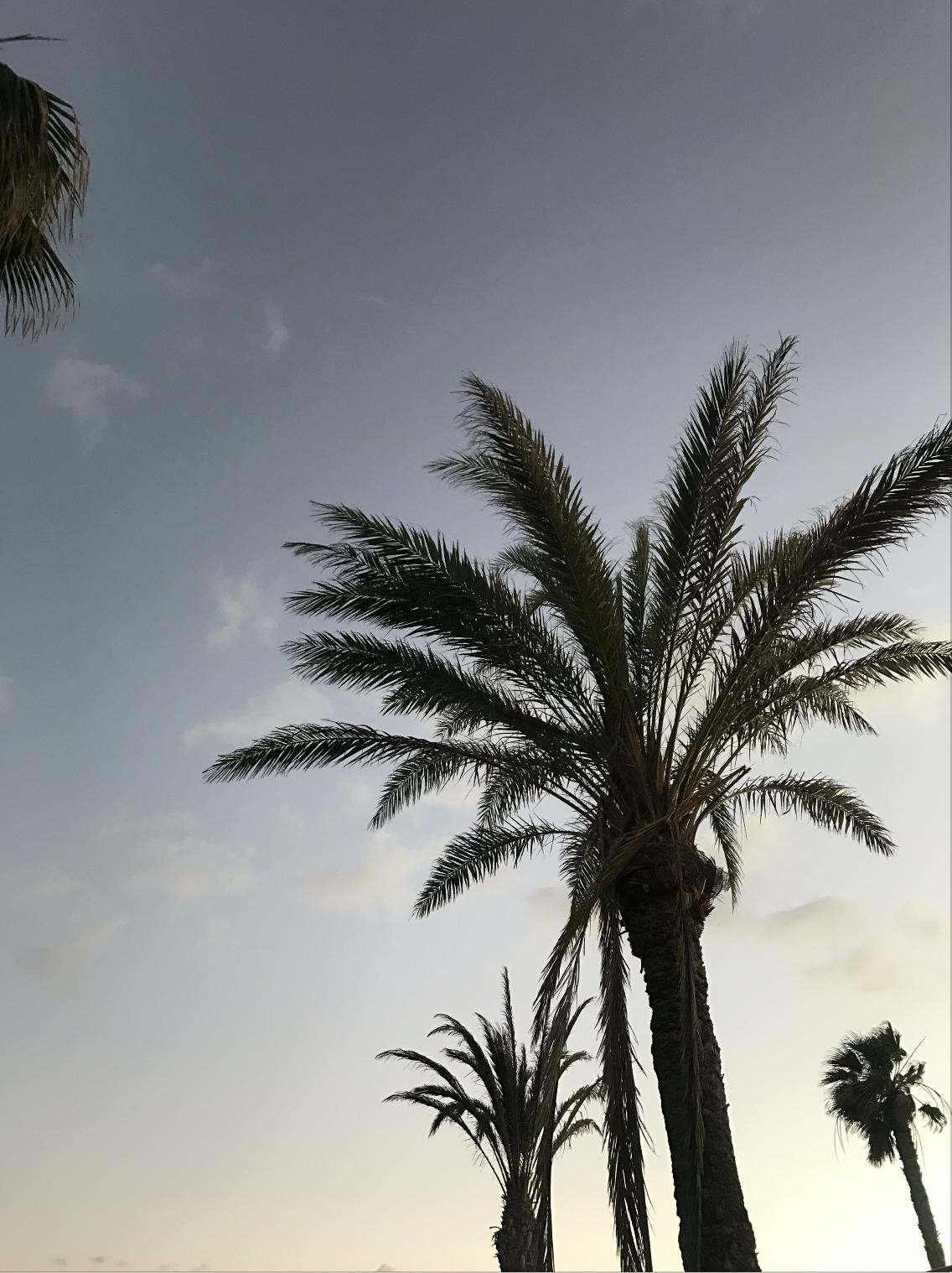 Fuerteventura : 3 jours pour découvrir l'île