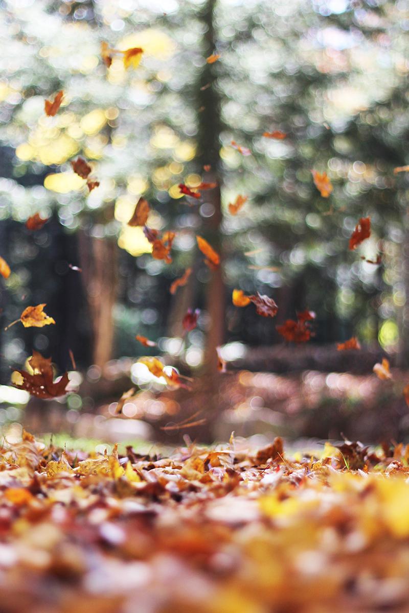 20-raisons-daimer-automne